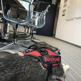 Mit Hund auf Geschäftsreise